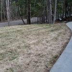 picture of yard landscping